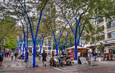 downtown-blue-trees-1