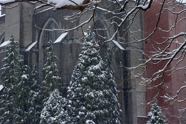 Snow in Seattle, 12-21-08