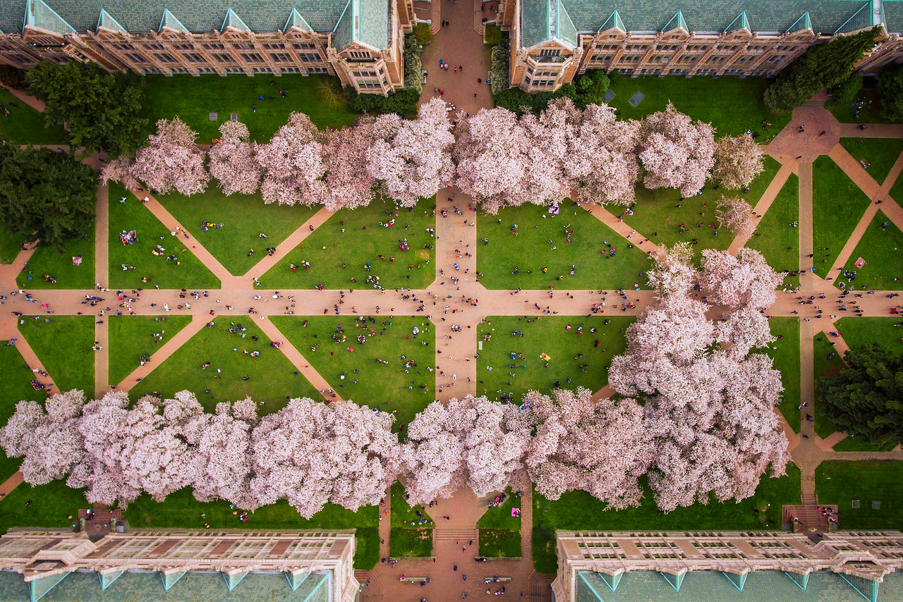 UW Quad in Full Bloom