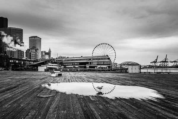 Jaden-Nyberg-2015-Seattle-Reflections-Seagull-One