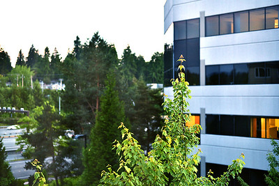 Office amongst trees, Bellevue