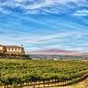 Vineyard with Vista View