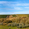 Orchards of Eastern Washington