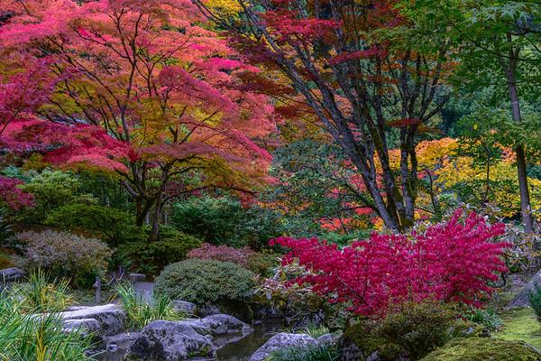 Autumn's Color Palette