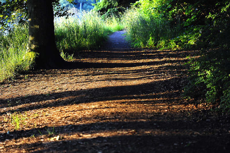Shadows On Trail<br /> <br /> Photographer's Name: Greg Rubstello