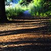 Shadows On Trail<br /> <br /> Photographer's Name: Greg Rubstello