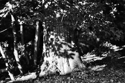Leaf Shadows On Tree  Photographer's Name: Greg Rubstello