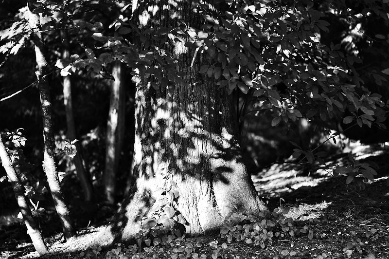 Leaf Shadows On Tree<br /> <br /> Photographer's Name: Greg Rubstello