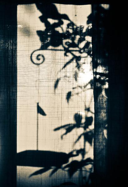 Photographer's Name: Dorrena Ortega