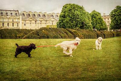 les chiens à paris  Photographer's Name: Jill Maguire