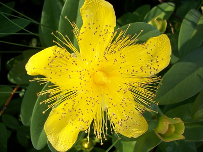 A splash of Yellow  Photographer's Name: Ed Sykes