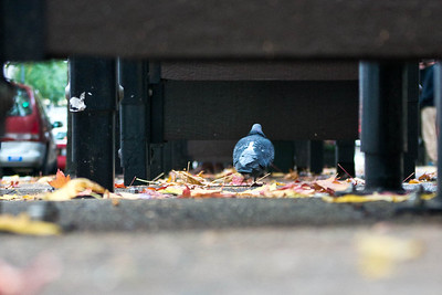 Pigeon perspective on a bus stop  Photographer's Name: Greg Marsh