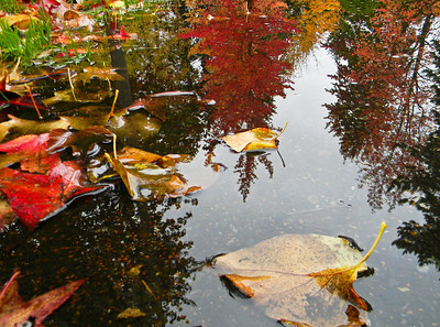 Leaves From Above  Photographer's Name: Dorrena  Ortega