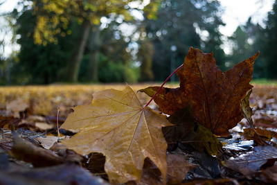Volunteer park leaf roundup  Photographer's Name: Greg Marsh