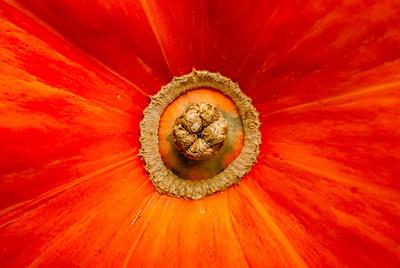 Eye of the Pumpkin  Photographer's Name: Heather Dutra