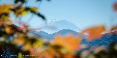 Mt Rainier in Fall  Photographer's Name: Pierre Folrev