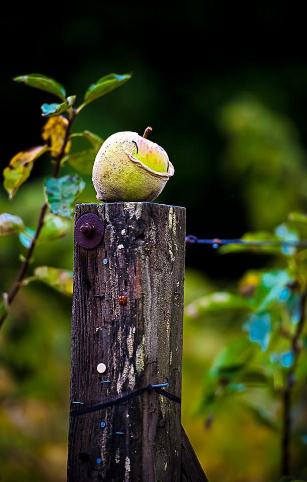 Apple  Photographer's Name: Greg Rubsello
