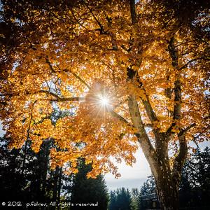 Bright  Photographer's Name: Pierre Folrev