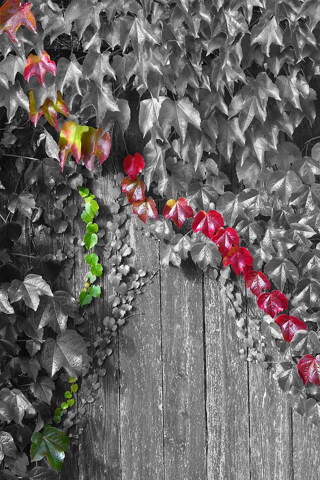 Falling colors  Photographer's Name: Tom Chwojko-Frank