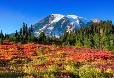 Mt. Rainier Fall Foliage  Photographer's Name: Mary Wang