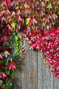Ivy rainbow  Photographer's Name: Tom Chwojko-Frank