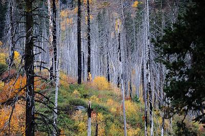Fall Colors On Stevens Pass  Photographer's Name: Greg Rubstello