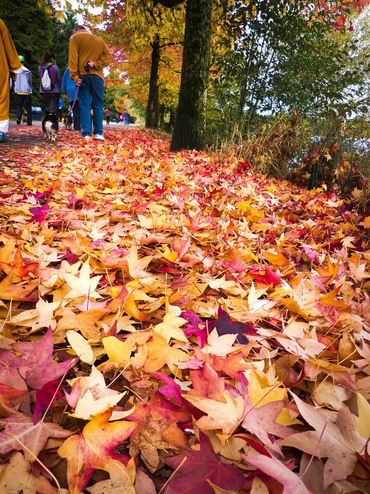 Corgi's eye view of fall  Photographer's Name: Syrinda Sharpe