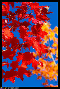 Red Gold Blue  Photographer's Name: Chris Banyai-Riepl