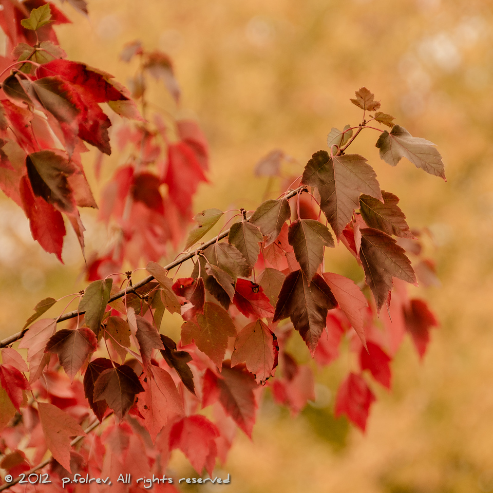 Foliage  Photographer's Name: Pierre Folrev