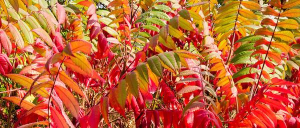 Autumn Texture  Photographer's Name: Ken Winnick