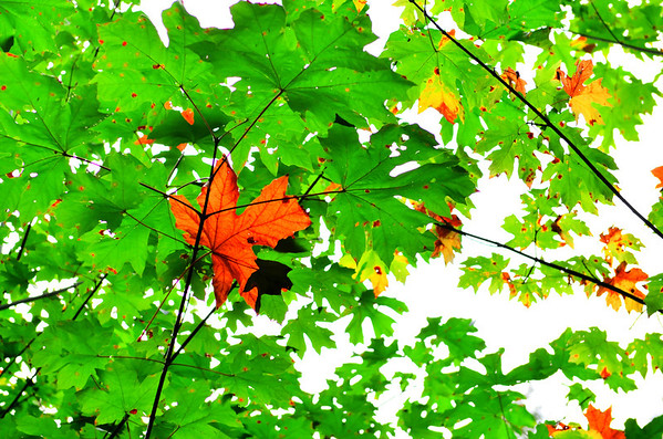 September 2012 Challenge: Summer to Fall