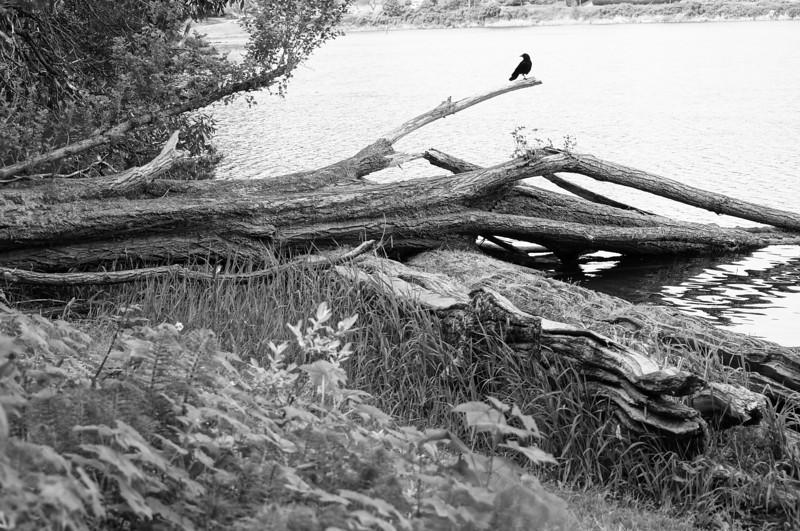 solitary bird<br /> <br /> Photographer's Name: brad kenny