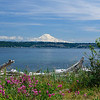 Mt Rainier from Point Robinson, Maury Island<br /> <br /> Photographer's Name: Heather Dutra
