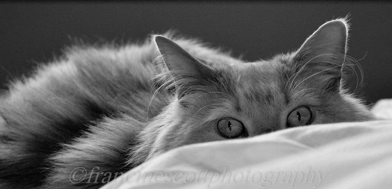 My view of our cat Cooper I wake up to every morning.  photo by Francine Scott<br /> <br /> Photographer's Name: francine scott