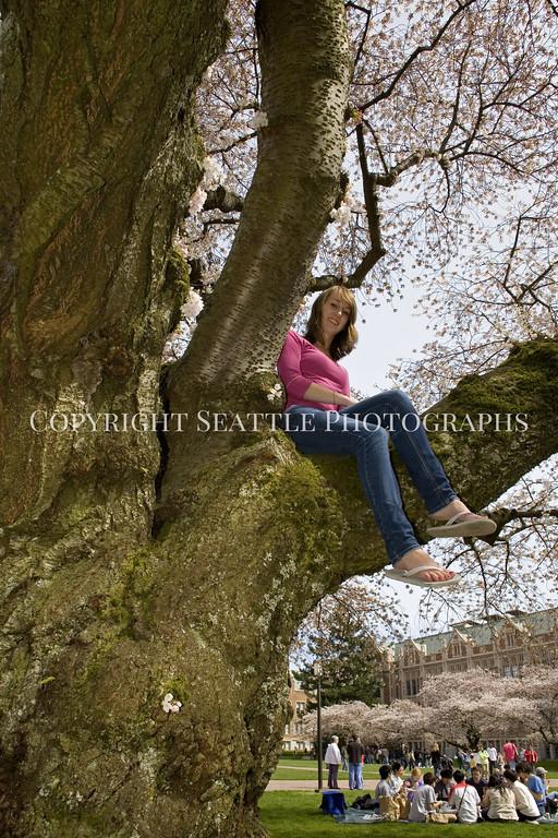 University of Washington Cherry Trees 256