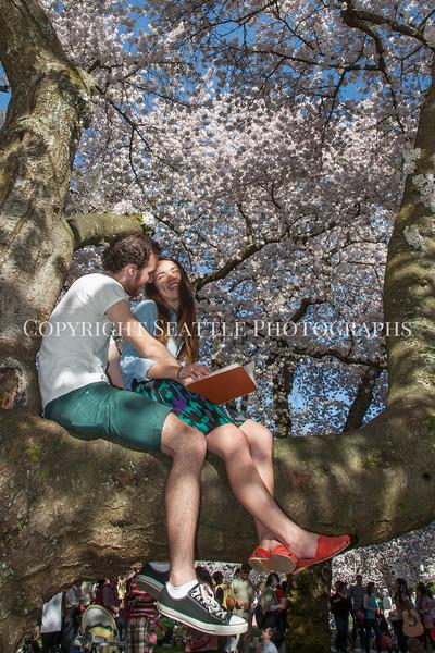 University of Washington Cherry Trees 186