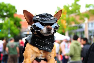 Doggie Drag Costume Contest