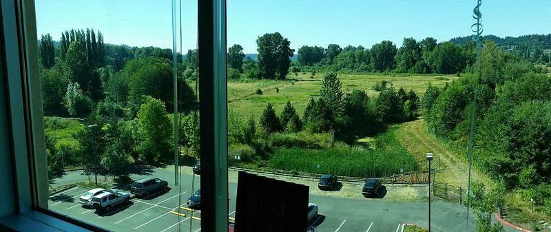 My office view, July 2014.  Microsoft SAMM-C, fourth floor, looking north at wetlands extreme SE corner Lake Sammamish.