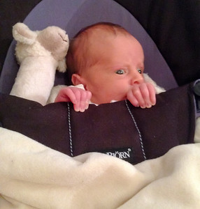 Introduction to the Baby Bouncer