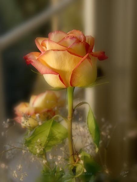 The E.Z. Rose