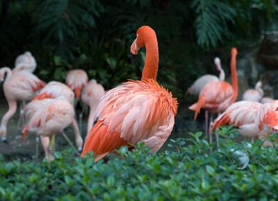 Brilliant Flamingo