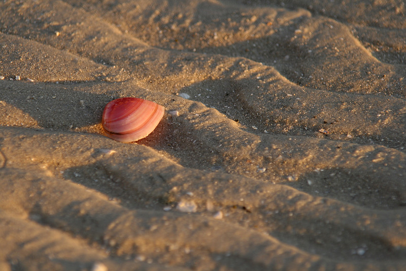 Sunrise shell