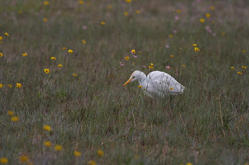 Egret in wildflowers
