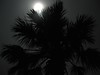 Moonlight through a palm