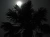 Moonlight through a palm