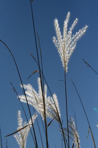 Whispy weeds