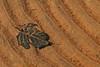 Sunken leaf