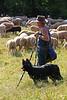 Shepherd tending to his flock