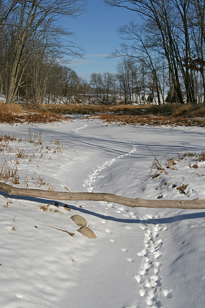 Snowy path, Linden Lake WI