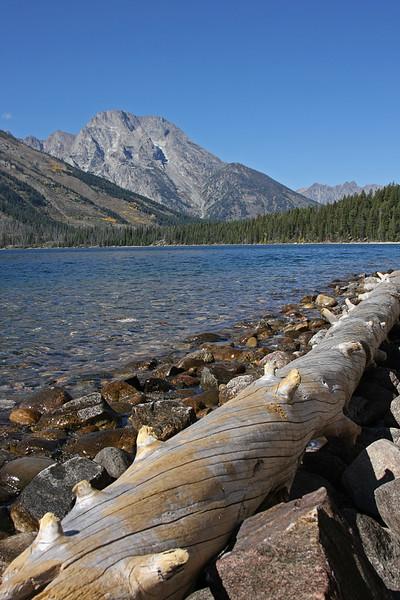 Jenny Lake log